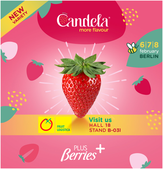 AGRO MARTIN CULTIVATES THE VARIETY CANDELA